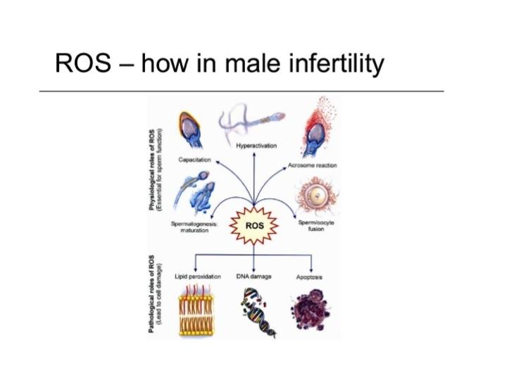 InVia Fertility Specialists Blog